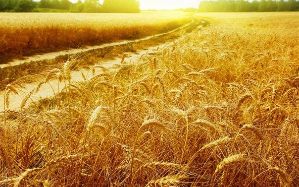 В Украине падают объемы сельхозпроизводства
